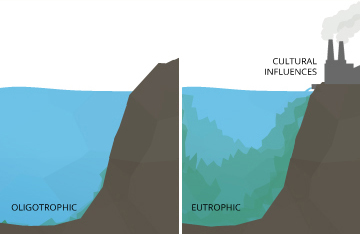 aumento menor en los niveles de pH puede hacer que un lago oligotrófico  se vuelva eutrófico